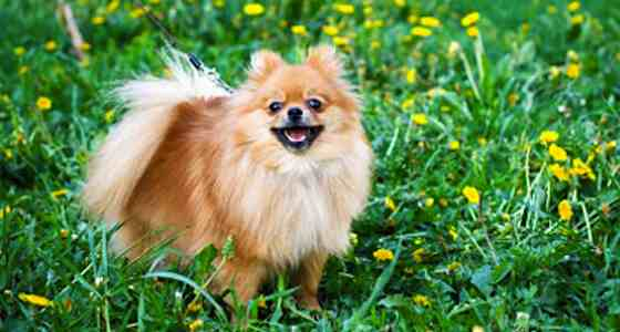 Dogs-Minimize-the-Shedding-Essential-Springtime-Dog-grooming-Tips-EC